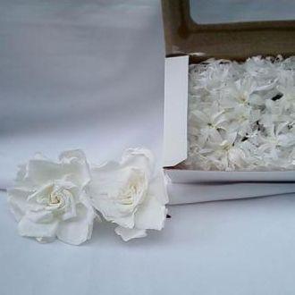 gardeniasenardospreservadoscorunica