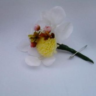 lapelacampestredeminicrisantemocorunica