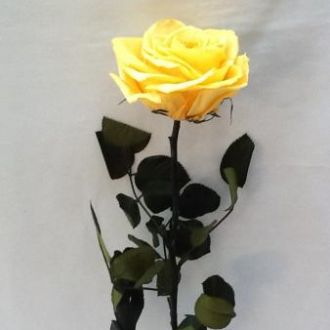 solitaria-amarela-flores-naturais-preservadas-buquegolden-yellow