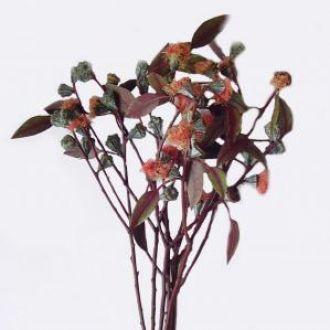 eucalipto-bolinha-vermelho-outonoburgundy