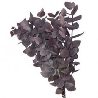 eucalipto-cinerea-natural-preservado-rosadocherry-blossom