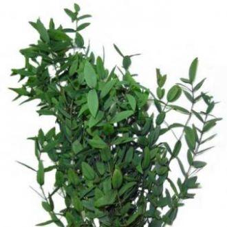 eucalipto-natural-preservado-parvifolha-cor-unica