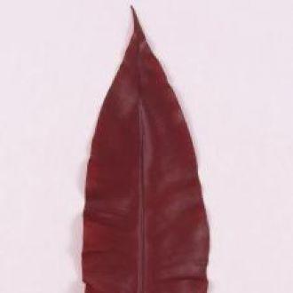 folha-longilinia-tropical-preservada-vermelha-outonoburgundy