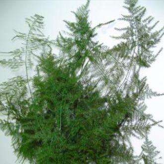 melindre-natural-preservado-cor-unica