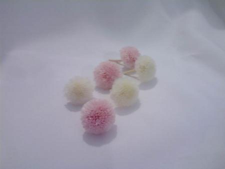 minicrisantemofocusnaturalpreservadocorunica