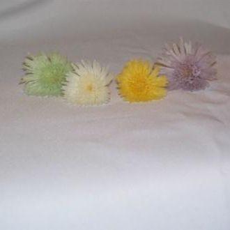 minicrisantemosharpnaturalpreservadocorunica
