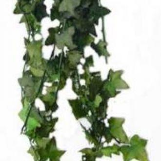 ramosdeheranaturaispreservadoscorunica