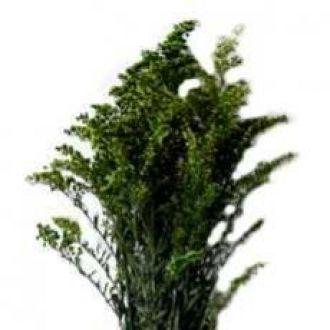 solidago-natural-preservado-verde-musgo-cor-unica