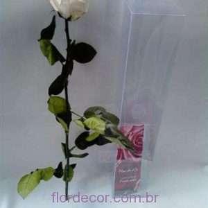 flor+de+cor+rosa+preservada+premium+branca+com+cabo+