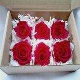 flor+de+cor+rosas+premium+vermelhas+preservadas+em+cabecas+6cx+