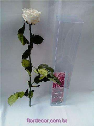 rosa branca premium com cabo
