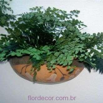 avencas+e+samambaias+preservadas+mint+green
