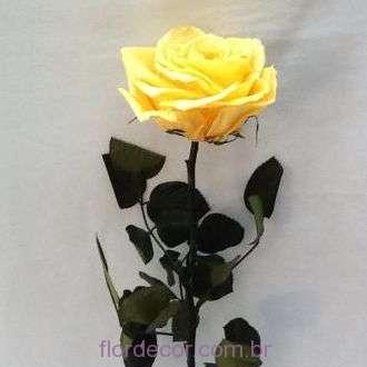 solitaria-amarela-flores-naturais-preservadas+golden-yellow